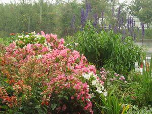 IMG_2736家の花壇