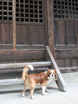 IMG_2796神社