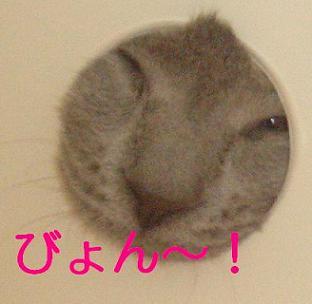 20070531213103.jpg