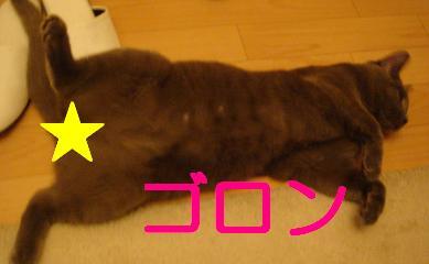 20070719210309.jpg