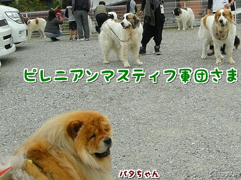 2-20110516.jpg