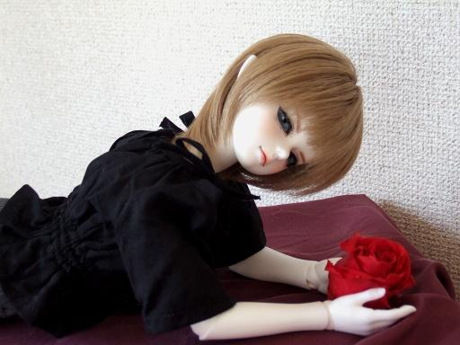 薔薇・アップ