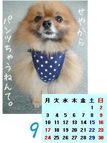 パンツカレンダー