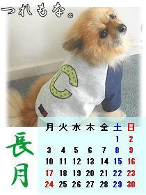 まるし~カレンダー
