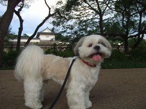 大阪城公園です☆
