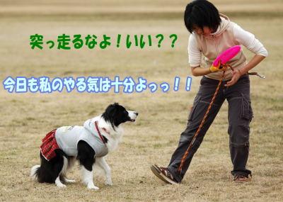 3_3coo2_21.jpg