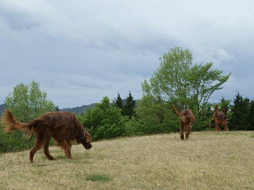 県民の森トレッキング2011.05.10 059
