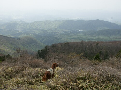 八海山 コーク