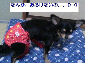 20061113220956.jpg