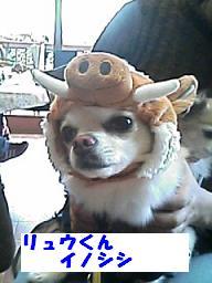 20070122223232.jpg