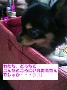20070213213359.jpg