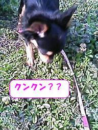 20070323221113.jpg