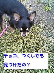 20070323221134.jpg