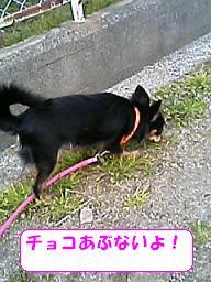 20070323221152.jpg