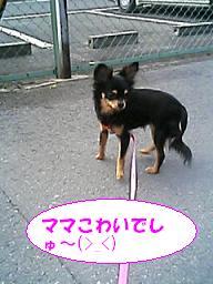 20070323221218.jpg