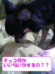 20070330091613.jpg