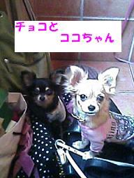 20070409144609.jpg
