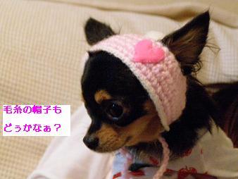 cyoko.jpg
