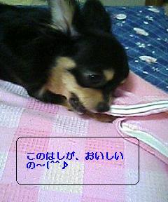 kamikami1.jpg