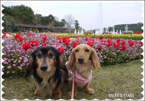 フラワーセンター201104③