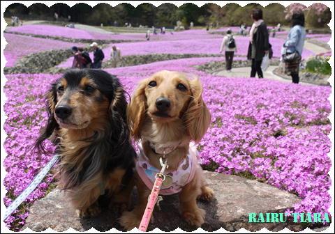 花じゅうたん⑤