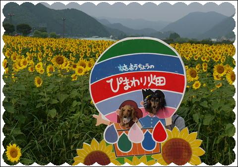 ひまわり2011⑤