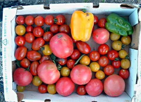 fc2_7_16(ヒルトンオヤジが一日に食べるトマトの量)