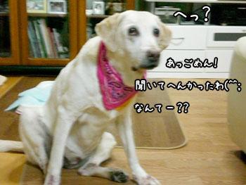 20061003172705.jpg