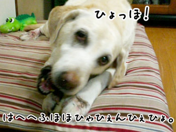 20061003173557.jpg