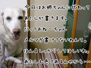 20061004180205.jpg