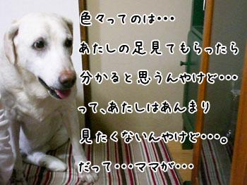 20061004180237.jpg