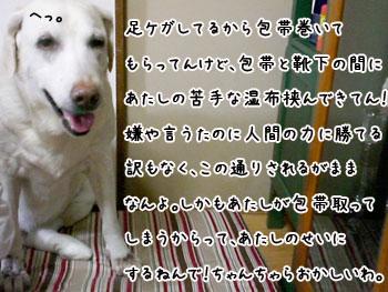 20061004180307.jpg