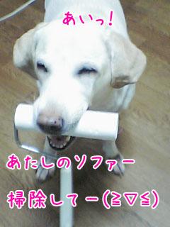 20061006153649.jpg
