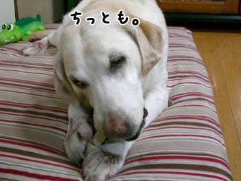20061008113854.jpg