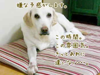 20061013111711.jpg