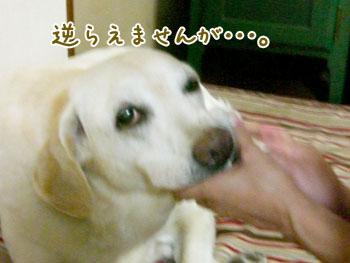 20061013111950.jpg