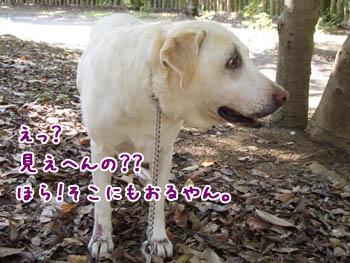20061015203259.jpg