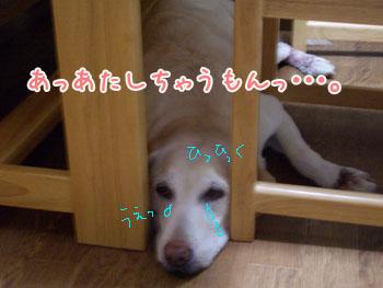 20061016174313.jpg