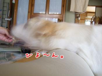 20061018152708.jpg