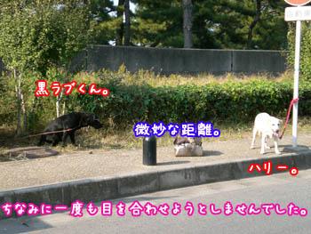 20061108003359.jpg