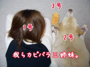 20061109005509.jpg
