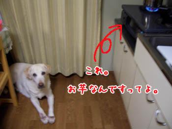 20061110004741.jpg