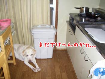 20061110005115.jpg