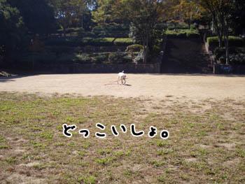 20061112233006.jpg