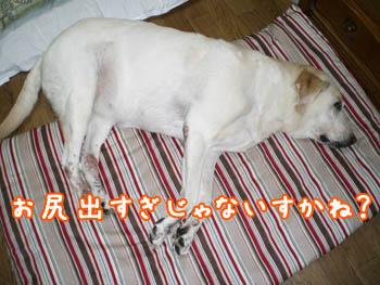 20061127000040.jpg