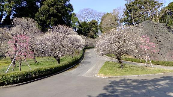 春先の梅林坂1