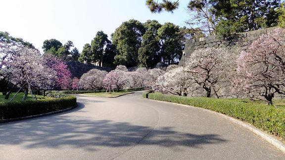 春先の梅林坂2