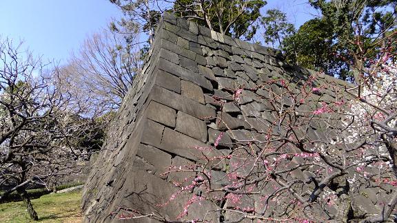 石垣と梅林