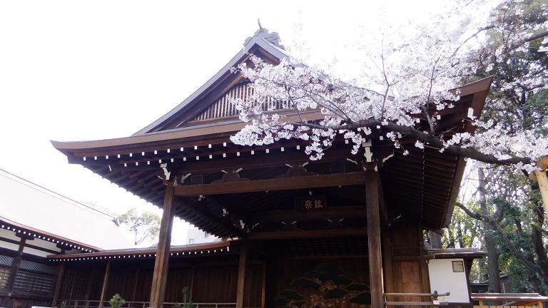 能舞台と桜