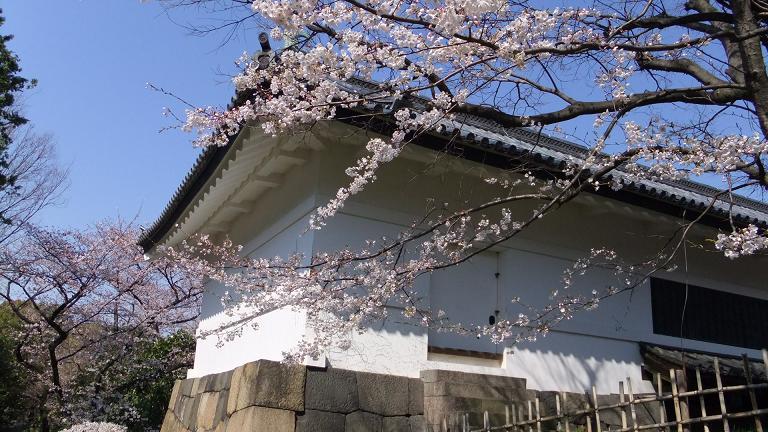 江戸城の桜2